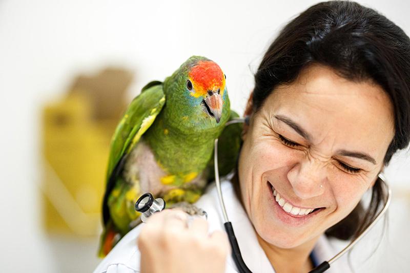 mulher com papagaio